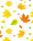Background with flying autumn leaves — Stock Photo