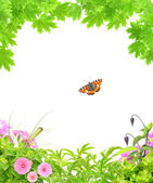 Summer frame with green maple leaves, flowers and insects — Stock Photo