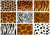 Collection of animals skins textures  — Stock Photo
