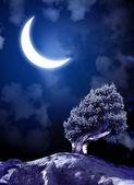 Nuit de conte de fées — Photo