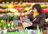 Beautiful girl selecting flowers at market — Stock Photo