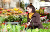 Chica hermosa selección de flores en el mercado — Foto de Stock