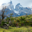 Stock Photo: Florof Torres del Paine, national park of Chile
