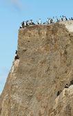 Kolonia kormoranów na wyspie marta w patagonii, chile — Zdjęcie stockowe