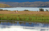Two flamingoes in the national park Torres del Paine, Chile, Sou — Stock Photo