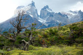 Flora of Torres del Paine, national park of Chile — Stock Photo