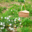 Stock Photo: Straw basket on vegetable patch