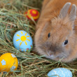 Easter bunny with colorful painted eggs in hay — Stock Photo