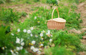 Straw basket on a vegetable patch — Stock Photo