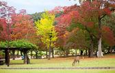 Deer in Nara, Japan, at fall — Zdjęcie stockowe