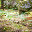 Wicker basket in a forest — Foto Stock
