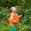 Adorable toddler boy in autumn forest — Foto de Stock