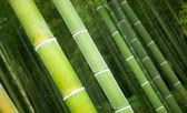 Close-up van bamboe schachten in een japanse forest — Stockfoto
