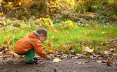 очаровательны малыш мальчик в осеннем лесу, играя с листьями — Стоковое фото