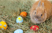 Conejo de pascua con coloridos huevos pintados en heno — Foto de Stock