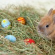 Easter bunny with colorful painted eggs in hay - Stock Photo