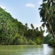 Tropical river with palm trees on both shores — Stock Photo