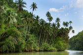 Tropical river with palm trees — Stock Photo