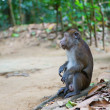 Longtail macaque in its natural environment — Stock Photo #26482093