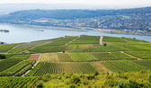 Wineyards in Rudesheim am Rhein — Stock Photo