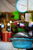Fischen auf wiegen waage — Stockfoto