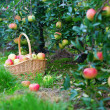 Apples in a basket — ストック写真