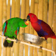 Two parrots  — Stock fotografie
