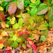 Leaves background — Stock Photo #33207365