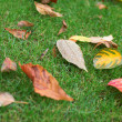 Colorful autumn leaves on the grass — Stock Photo