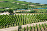 Vineyards in Rudesheim am Rhein — Stock Photo