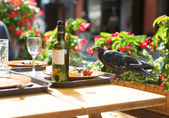 Bird on a table, eating leftovers from plates — Stock Photo