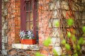 Window with flower pot — Stock Photo