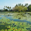 Beautiful lotus lagoon in Candidasa, Bali — Stock Photo #49600485