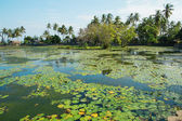 Beautiful lotus lagoon in Candidasa, Bali — Stock Photo