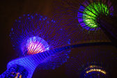 The Supertree at Gardens by the Bay seen by night — Foto Stock