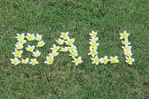 Word Bali written with tropical frangipani flowers — Stock Photo