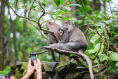 Tourist taking picture of monkey family — 图库照片