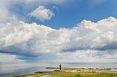 Hombre alimentación de aves en el mar. — Foto de Stock