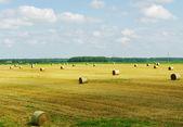 Hay croping. — Stock Photo