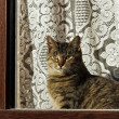 Tabby cat. — Stock Photo