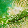 Fir tree. — Stockfoto