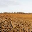 Plowed field. — Stock Photo #19089009