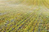 White frost on green land. — Zdjęcie stockowe