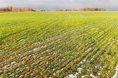 Rural landscape. — Foto Stock