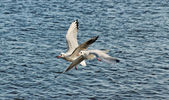 Two seagulls. — Stock Photo