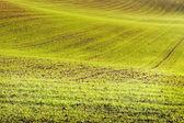 Wheat land. — Stock Photo