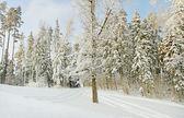 Beautiful winter. — Stock Photo