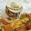 Apiarist. — Stock Photo #25633189