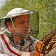 Stock Photo: Apiarist.