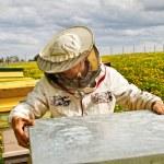 apicoltore — Foto Stock